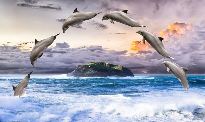 dolphin-1548405_1280