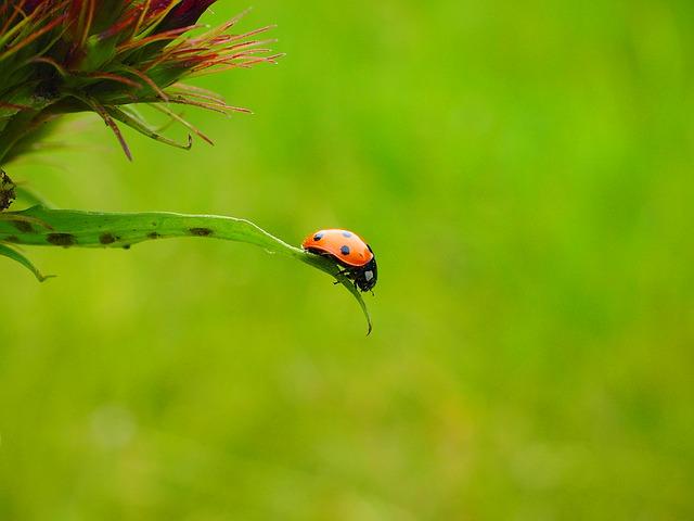 ladybug-1271960_640