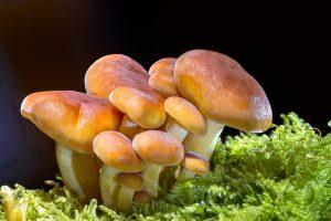 mushroom-2279558_1280